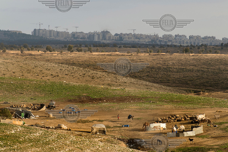 A small Bedouin livestock camp housing sheep and camels. In the background is the city of Be'er Sheva.