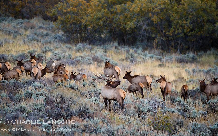 Note Buck Deer