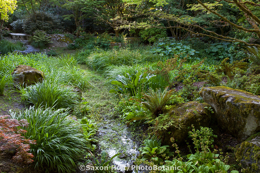Stream through bog area of Shorts Ground Cover Garden at Bellevue Botanical Garden