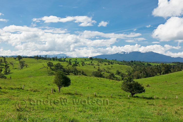 Rolling pastures on the Atherton Tablelands.  Millaa Millaa, Queensland, Australia
