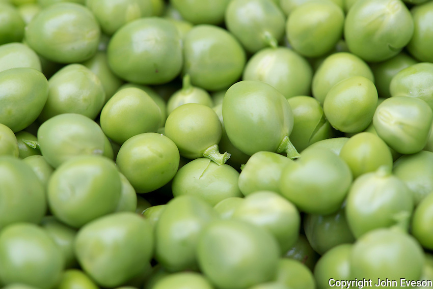 Close-up of garden peas, Chipping, Lancashire.