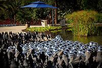 Brumadinho_MG, Brasil...Centro de Arte Contemporanea Inhotim (CACI). Na foto a obra Narcissus Garden Inhotim de Yayoi Kusama...The Inhotim Contemporary Art Center (CACI). In this photo the art Narcissus Garden Inhotim of Yayoi Kusama...Foto: BRUNO MAGALHAES / NITRO