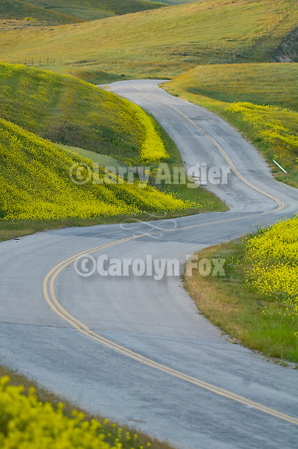 Mustard lined snaking road winds down into the Bitterwater Valley in central California at dusk.