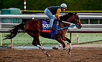 October 27, 2019 : Breeders' Cup Sprint entrant Engage, trained by Steven M. Asmussen, exercises in preparation for the Breeders' Cup World Championships at Santa Anita Park in Arcadia, California on October 27, 2019. Scott Serio/Eclipse Sportswire/Breeders' Cup/CSM