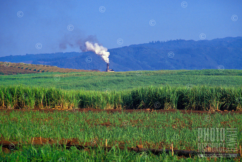 Sugar cane field with sugar mill in background, Mahaulepu, Poipu