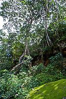 Mt. Kulen Jungle, Cambodia