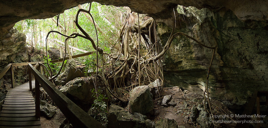 Grand Bahama Island, The Bahamas; a panoramic view of the wooden boardwalk  and stairs leading into Burial Mound Cave, with the hanging vines coming in from above