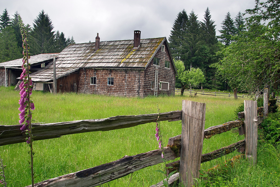Kestner-Higley Homestead, Maple Glade Rain Forest Trail, Quinault Rain Forest, Olympic National Park, Olympic Peninsula, Grays Harbor County, Washington, USA