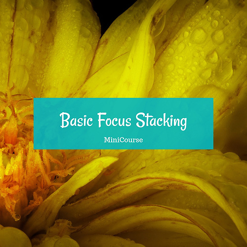 Basic Focus Stacking MiniCourse