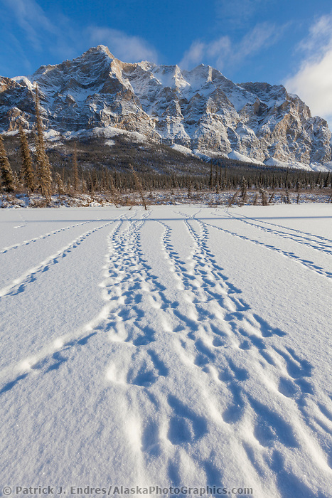 Ptarmigan tracks in the snow and Mt Sukakpak of the Brooks Range in the distance.