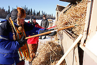 Saturday  March 13 , 2010  After raking up the used straw left by a musher, volunteer helpers Debbie Koontz (L) of Galena and Janet Ross-Snyder (r) toss the straw  into a burn dumpster at the Galena checkpoint .