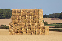 Square bales of straw stacked in the field<br /> &copy;Tim Scrivener Photographer 07850 303986<br />      ....Covering Agriculture In The UK....