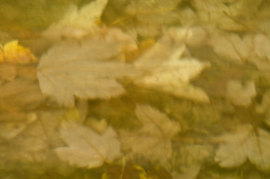 Underwater dead leaves in autumn, Plitvice National Park, Croatia