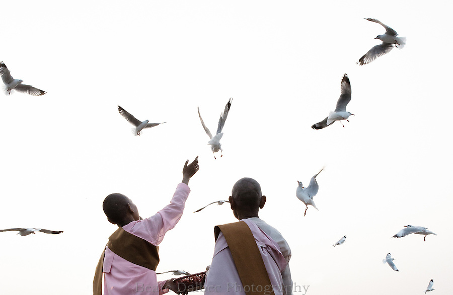 Nuns feeding seagulls in Yangon harbor, Myanmar