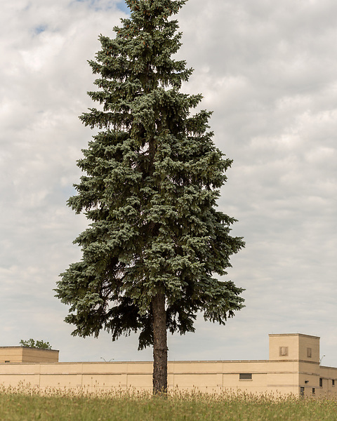 August 5, 2016. Flint, Michigan. <br />  A tree at the Flint Water Plant. <br />  In April 2014, the city of Flint switched its water source from the Detroit Water and Sewerage Department to using the Flint River in an effort to save money. When the switch occurred, the city failed to have corrosion control treatment in place for the new water. This brought about a leaching of lead from pipes into the water, increasing the lead content in the drinking water to levels far above legal limits. After independent sources brought this to light, the city admitted the water was unsafe and legal battles have ensued between resident and the local and state governments.