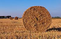 Italien, Piemont, abgeerntete Reisfelder in der Po-Ebene