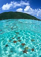 Split level view of Pincushion starfish<br /> Leinster Bay<br /> Virgin Islands National Park<br /> St. John<br /> US Virgin Islands