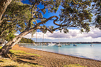 Swing hanging from a Pohutukawa Tree on Russell Beach, Bay of Islands, Northland Region, North Island, New Zealand