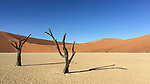 Trees And Dunes In The Deadvlei Area, Sossuvlei.