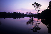 Amazon, Brazil. Still peaceful evening view of the Rio Negro river at high water with trees reflected in the tranquil water.