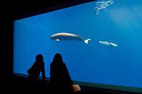 aquarium visitors observing a pair of finless porpoises, Neophocaena phocaenoides (c), Indo-Pacific Ocean