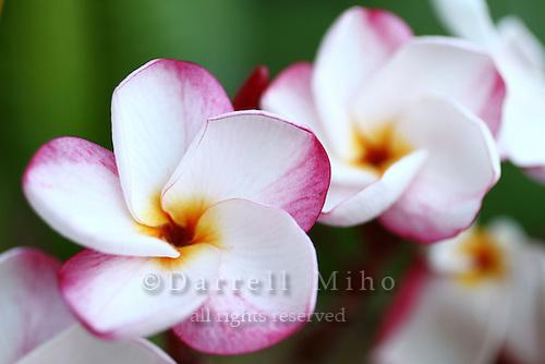 August 31, 2011; Monterey Park, CA - flowers