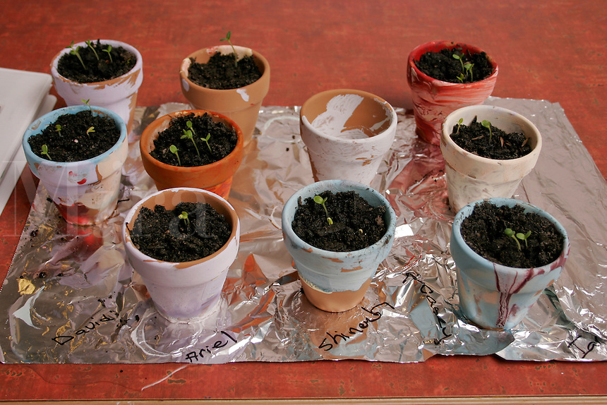 Preschool science experiment; growing plants from seeds.