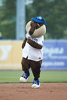 """West Michigan Whitecaps mascot """"Crash the River Rascal"""" runs the bases between innings of the Midwest League game against the South Bend Cubs at Fifth Third Ballpark on June 10, 2018 in Comstock Park, Michigan. The Cubs defeated the Whitecaps 5-4.  (Brian Westerholt/Four Seam Images)"""