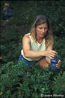 Woman picking wild blueberries