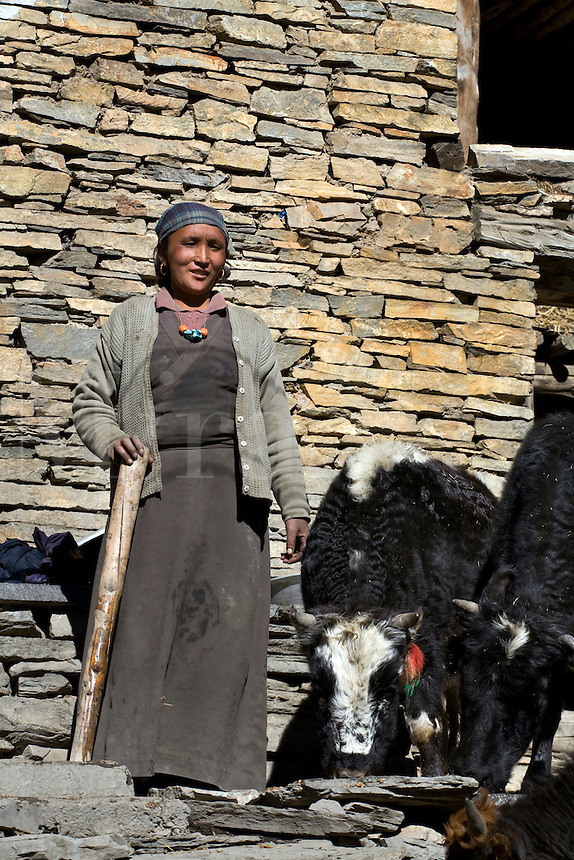 A young TIBETAN WOMAN with YAKS in NAR village - NAR PHU TREK, ANNAPURNA CONSERVATION AREA, NEPAL