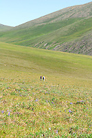 Jonathan and Edward Bennett hike in Caribou Pass, above the Kongakut River, in Alaska's Arctic National Wildlife Refuge.