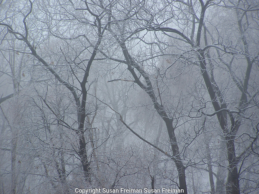 ice, snow, fog, water in all its forms