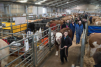 Stirling Bull Sales 2018<br /> Buyers looking at Bulls at the Stirling Bull Sales<br /> &copy;Tim Scrivener Photographer 07850 303986<br /> ....Covering Agriculture In The UK....