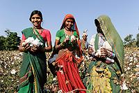 INDIA, Madhya Pradesh, Khargone , cooperative Shiv Krishi Utthan Sanstha produce fairtrade and organic cotton, tribal women harvest cotton by hand /  INDIEN, Madhya Pradesh, Khargone , Kooperative Shiv Krishi Utthan Sanstha vermarktet fairtrade und Biobaumwolle von Adivasi Farmern, Adivasi Frauen pfluecken Baumwolle per Hand