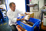 Sydney Fish Market is the largest market of its kind in the Southern Hemisphere and the world's second largest seafood market in terms of variety outside of Japan, SFM auctions over 100 species daily. Sourcing product both nationally and internationally, SFM trades close to 13,000 tons of seafood annually..Chef Michael Moore, owner of Summit Restaurant, sources his fish from Christies Seafood and is pictured here selecting fish for the restaurant.