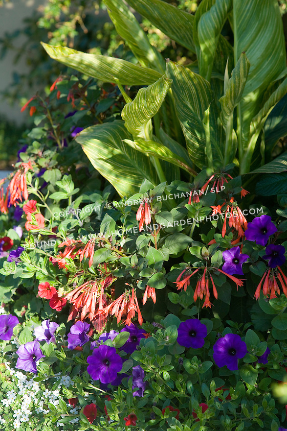 purple petunias, red million bells, pink fuschias, and white lobelia form a colorful foreground for the foliage of tropical-looking, variegated canna leaves set behind