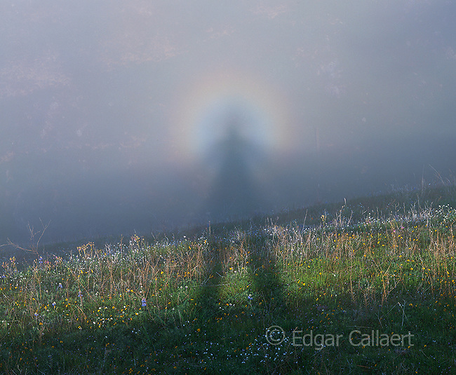 Self Portrait in the Fog, Brocken spectre, Los Padres National Forest, Big Sur, Monterey County, California
