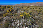 Desert flowers and sagebrush in The Great Sand Dunes National Park and Preserve, Colorado; USA