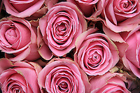 A floral bouquet of pink roses