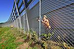AMSTERDAM - In Amsterdam werken medewerkers van Meijer Hekwerken uit Kootwijkerbroek namens bouwcombinatie CADICOM aan een drie kilometer lang hek achter de nieuwe geluidsschermen langs de snelweg A1 tussen knooppunt Watergraafsmeer en Diemen. Het hoge hek is aangelegd in opdracht van Rijkswaterstaat, voor klimplanten en kan tevens graffity op de schermen voorkomen. De werkzaamheden zijn onderdeel van het project A10-Oost/A1 dat onderdeel is van de weguitbreiding tussen Schiphol-Amsterdam-Almere (SAA). CADICOM bestaat uit Dura Vermeer, Besix en Cofely. Het project SAA(Schiphol-Amsterdam-Almere is met een budget van 4,1 miljard euro één van degrootste infra-projecten van Nederland. COPYRIGHT TON BORSBOOM