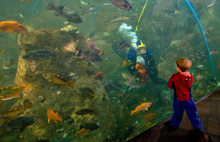 Seattle, Seattle Aquarium, scuba diver feeds fish in giant aquarium, Port of Seattle, Elliott Bay, Puget Sound, Washington State, Pacific Northwest,