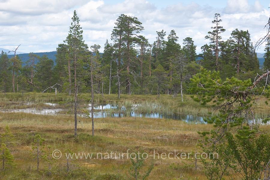 Hochmoor, Hoch-Moor, Moor mit Torfmoos, Skandinavien, Schweden, Nationalpark Fulufjället, bog with peat moss, Scandinavia, Sweden, Fulufjället National Park