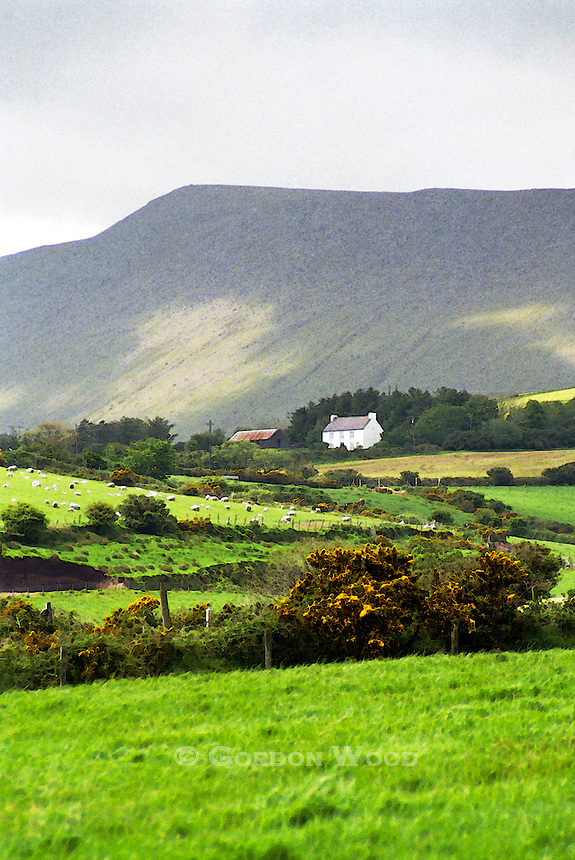 Irish Farm - Dingle Peninsula. Watercolor effect.