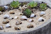 Wildbienen-Nisthilfe aus Schneckengehäusen, Schneckengehäuse, Schneckenhaus, Schneckenhäusern, verschieden große, leere Schneckenhäuser werden in eine sandgefüllte Schale gelegt, Schnirkelschnecken. Wildbienen-Nisthilfen, Wildbienen-Nisthilfe selbermachen, selber machen, Wildbienenhotel, Insektenhotel, Wildbienen-Hotel, Insekten-Hotel
