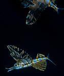 Flyingfish reflection WPB