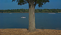 Rowers paddle in different directions along the length of Hoover Reservoir past Red Banks park.