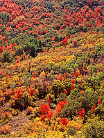 This colorful autumn tapestry consists mostly of maple and oak with a scattering of aspen in the Wasatch Mountains of central Utah