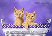 Xavier, ANIMALS, REALISTISCHE TIERE, ANIMALES REALISTICOS, cats, photos+++++,SPCHCATS795,#a#