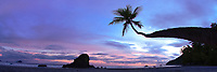 palm tree and Sunset Manual Antonio beach Costa Rica, Pacific Ocean
