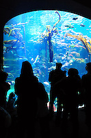 Dec. 30, 2009 - San Francisco, California, USA - People view the large variety of fish and other creatures on display in the huge aquarium at the California California Academy of Sciences Natural History Museum in San Francisco Wednesday December 30, 2009.  (Photo by Alan Greth)